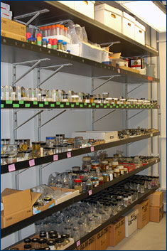 Just some of the specimens that need new preservation fluid, labels, and curation
