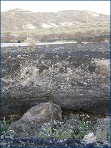Sandy tar deposits at the McKittrick tar seeps in Kern County