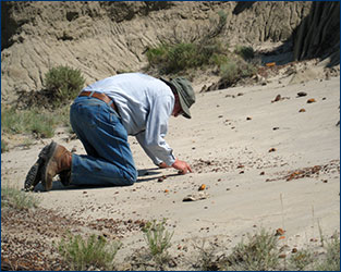 Bill Clemens looks for earliest Paleocene microfossils