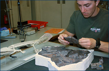 Brian Swartz working on a tetrapod precusror at the Cambridge Museum of Zoology