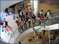 T. rex and Pteranodon in the Wallace Atrium