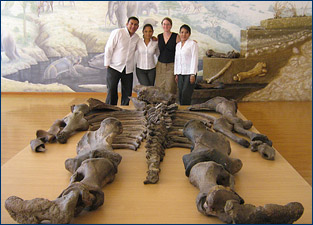 Emily Lindsey and her Ecuadorian colleagues with the bones of Eremotherium