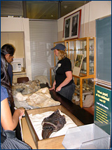 Sarah Werning shows off some vertebrate fossils found locally