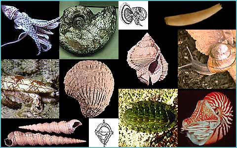 mollusc collage