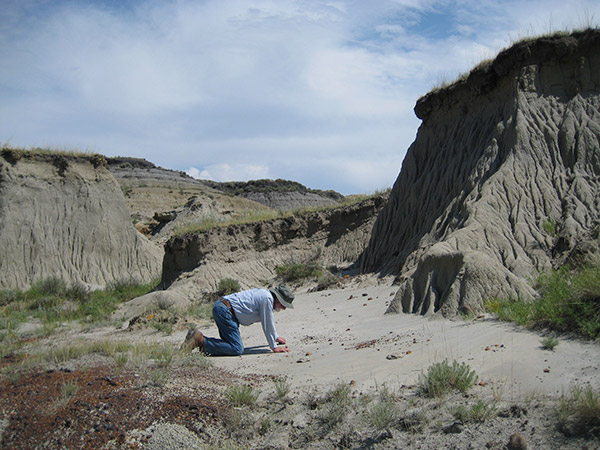 hell creek formation fossils