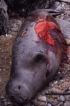 http://www.ucmp.berkeley.edu/vertebrates/Doug/livebite.jpg