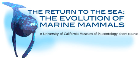 Marine Mammals short course 2011