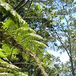 Mauna Kea vegetation