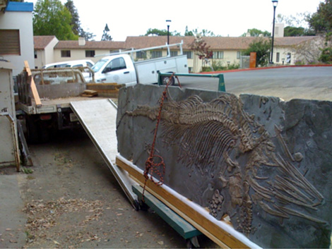 Moving the ichthyosaur from Clark Kerr to VLSB