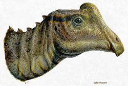 Baby Parasaurolophus reconstruction by Tyler Keillor