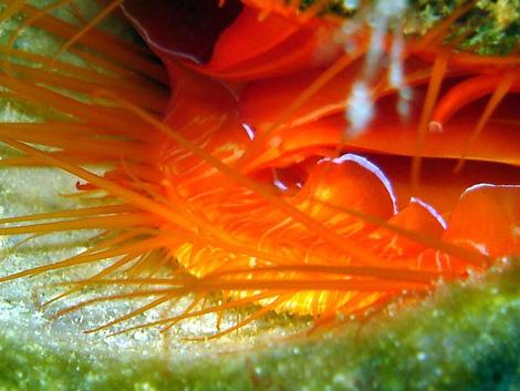 Disco clam flashing