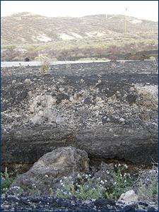 Sandy tar deposits at the McKittrick tar seeps in Kern County. Photo by Susumu Tomiya