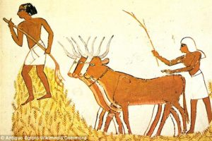 Egyptian farmers in the Neolithic period 5,000-6,000 years ago.