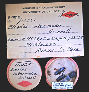 Image of Holotype 10024. Online specimen record.