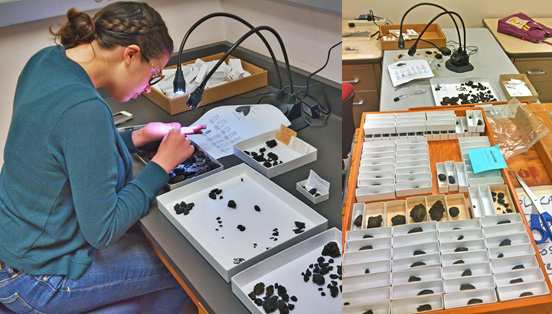 Meschelle Thatcher (left) examining the uncatalogued McKittrick bulk asphalt samples for beetle remains and her finds (right).