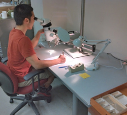 Hiep using the microscope camera-lucida setup to make tracings of his specimens.