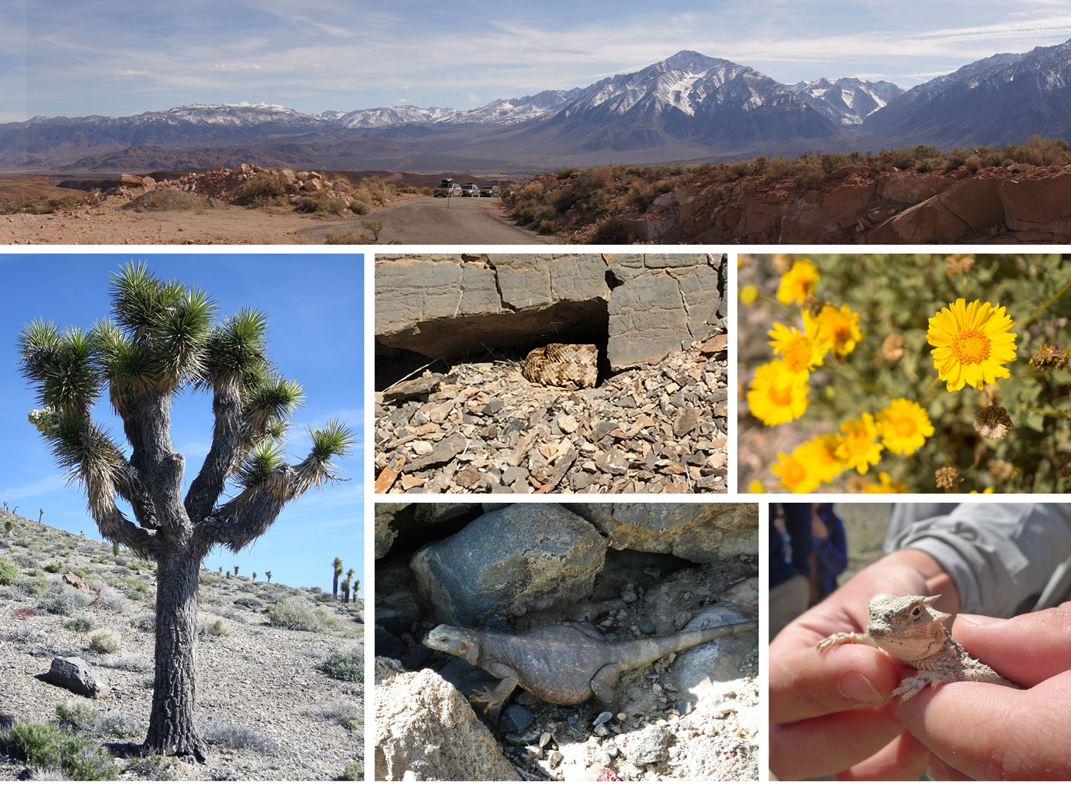 Death Valley Flora and Fauna