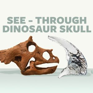 Crowdfunding for See-Through Dinosaur Skull