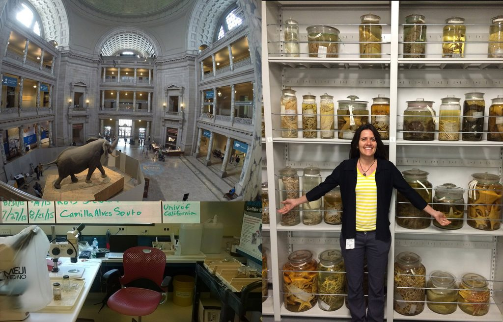 Figure 5: Photograph of the NMNH building (top left), of my workstation at the Museum Center in Suitland (bottom left), and of myself with the oversized echinoderms in the wet collection (right).