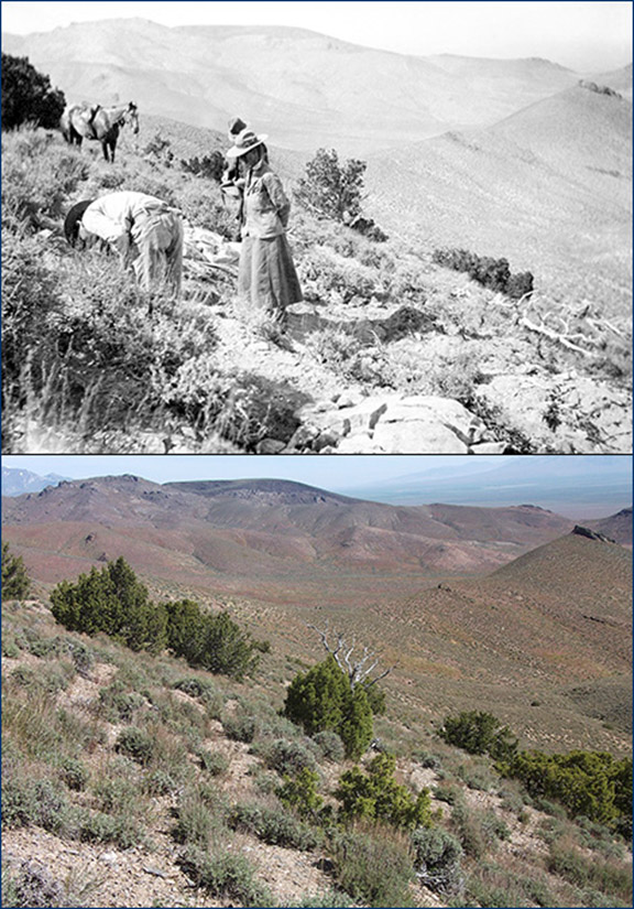 Top: Annie Alexander watches Eustace Furlong in a quarry on the east slope of Saurian Hill. Bottom: The approximate location of the same quarry today. Top photo from Alexander's Saurian Expedition of 1905 scrapbook, UCMP archives; bottom photo by David Smith.