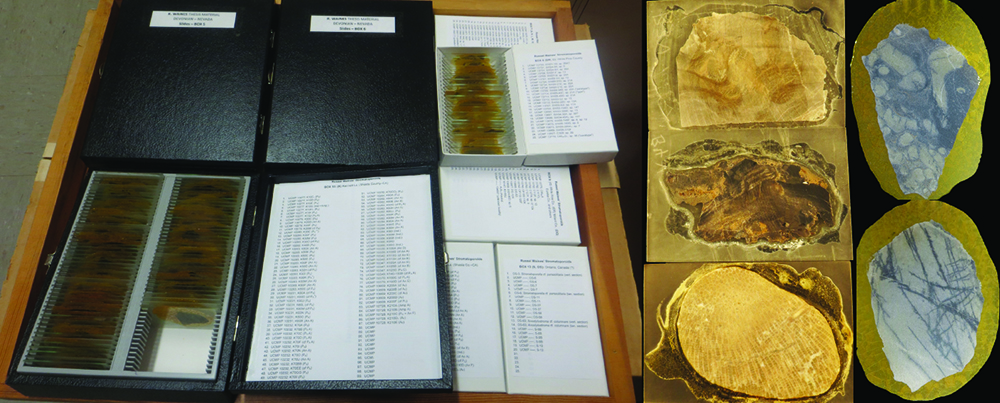 Figure 2: This collection houses 16 boxes with the slides from cross sections of the specimens. On the right are images of some of these slides. Photo courtesy of author.