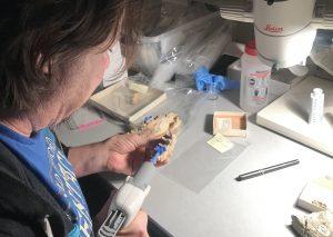 Grant Gully makes dental molds of marsupial teeth.