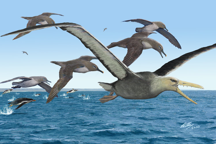 An artist's depiction of ancient albatrosses harassing a pelagornithid
