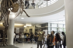 Volunteer Danny Anduza interpreting T.rex