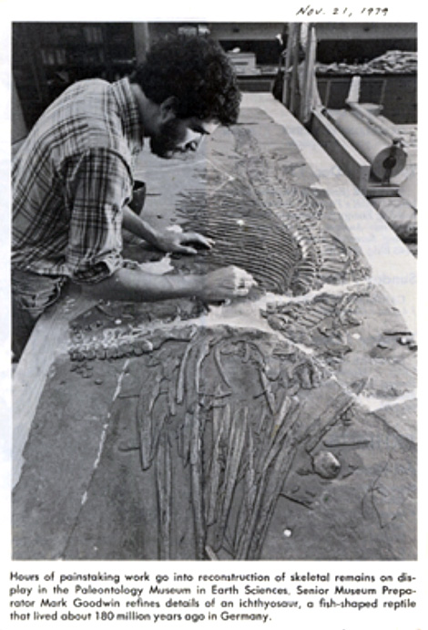 Mark Goodwin circa 1979, preparing the icthyosaur reconstruction, then on display in McCone Hall.